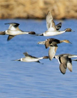 Changes to Waterfowl Blind site drawings