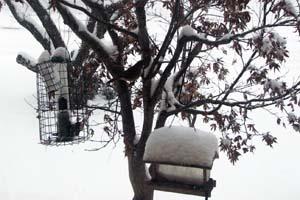 Snow13b