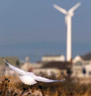 WindPowerBird