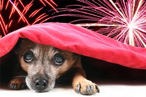 FireworksPets