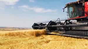 WheatHarvestFilm2