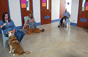 Offenders teach dogs basic obedience skills as part of the Guardian Angels program at Mabel Bassett.