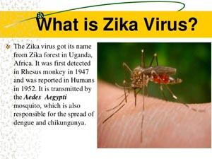 ZikaVirus2
