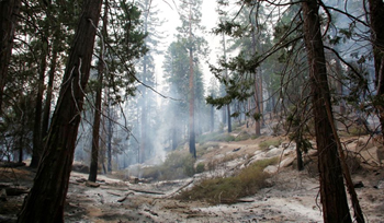 Sequoia National Forest fire damange